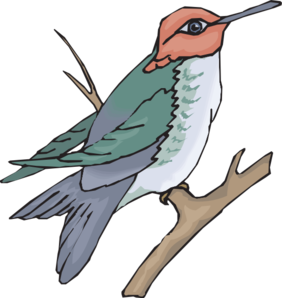 Sunbird clipart #9, Download drawings