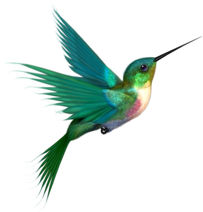 Sunbird clipart #6, Download drawings