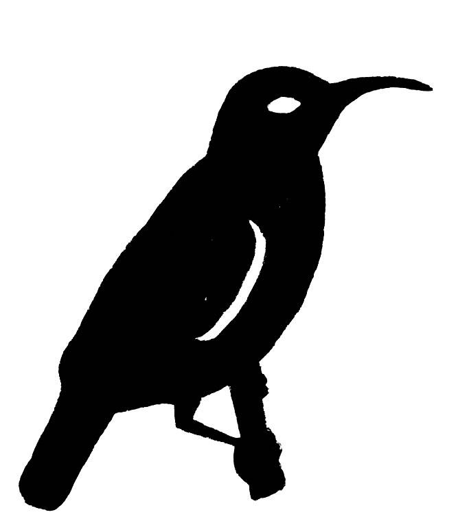 Sunbird clipart #3, Download drawings