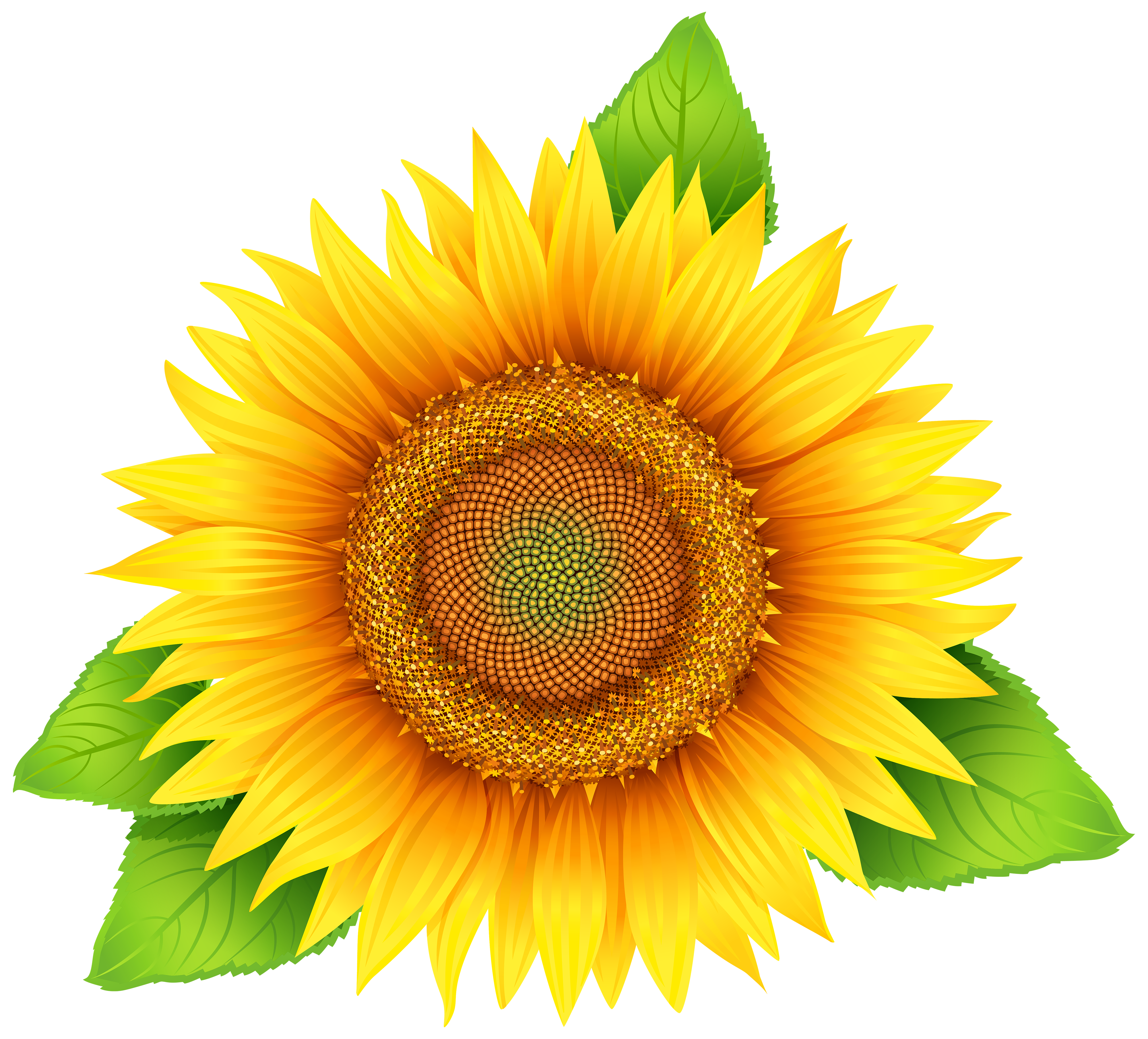 Sunflower clipart #2, Download drawings