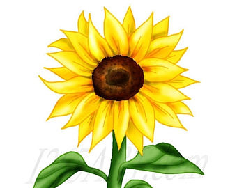 Sunflower clipart #16, Download drawings