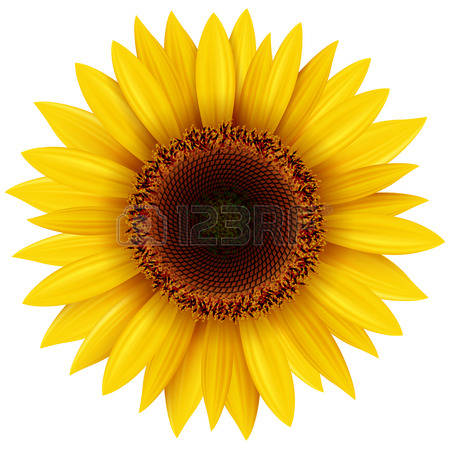 Sunflower clipart #12, Download drawings