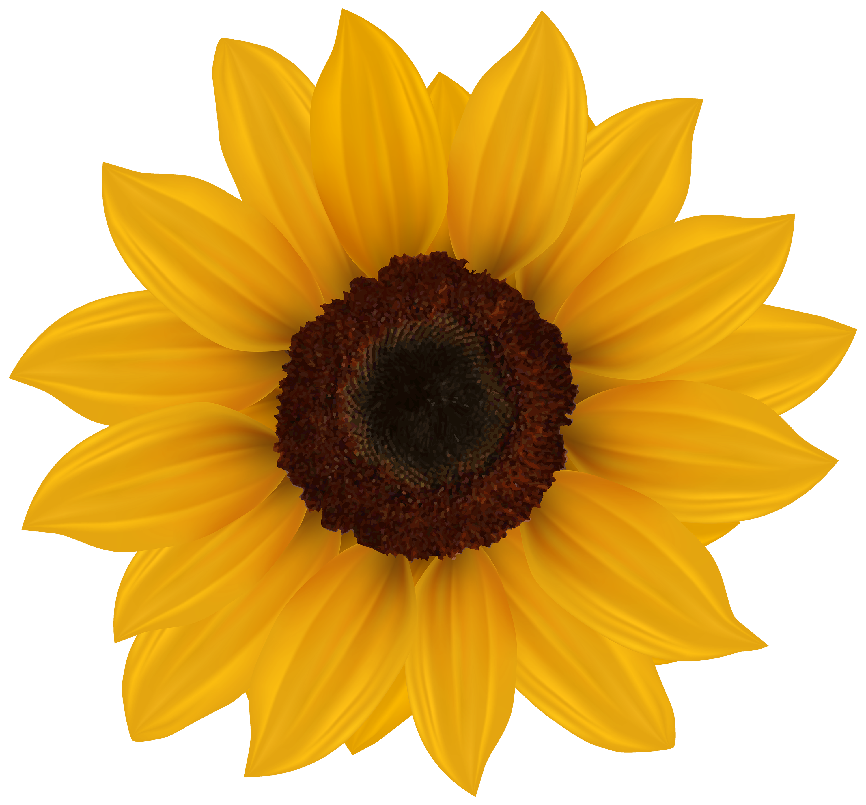 Sunflower clipart #3, Download drawings