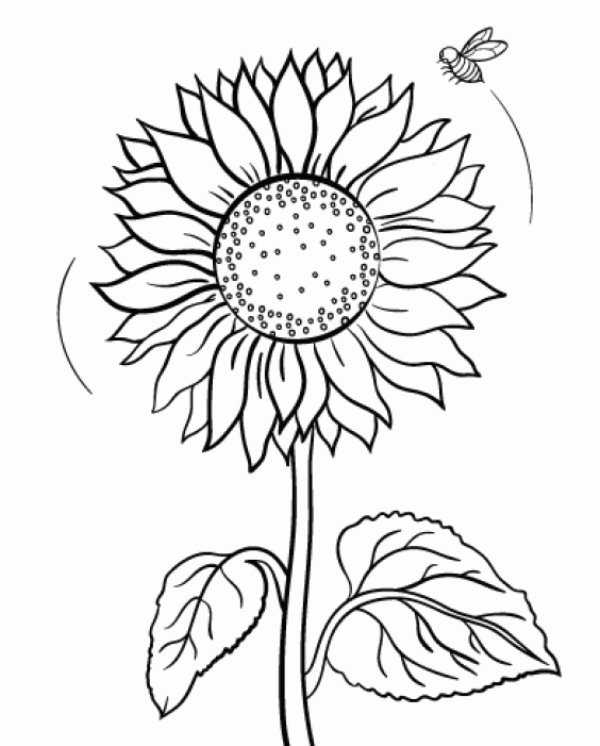 Sunflower Coloring Download Sunflower Coloring