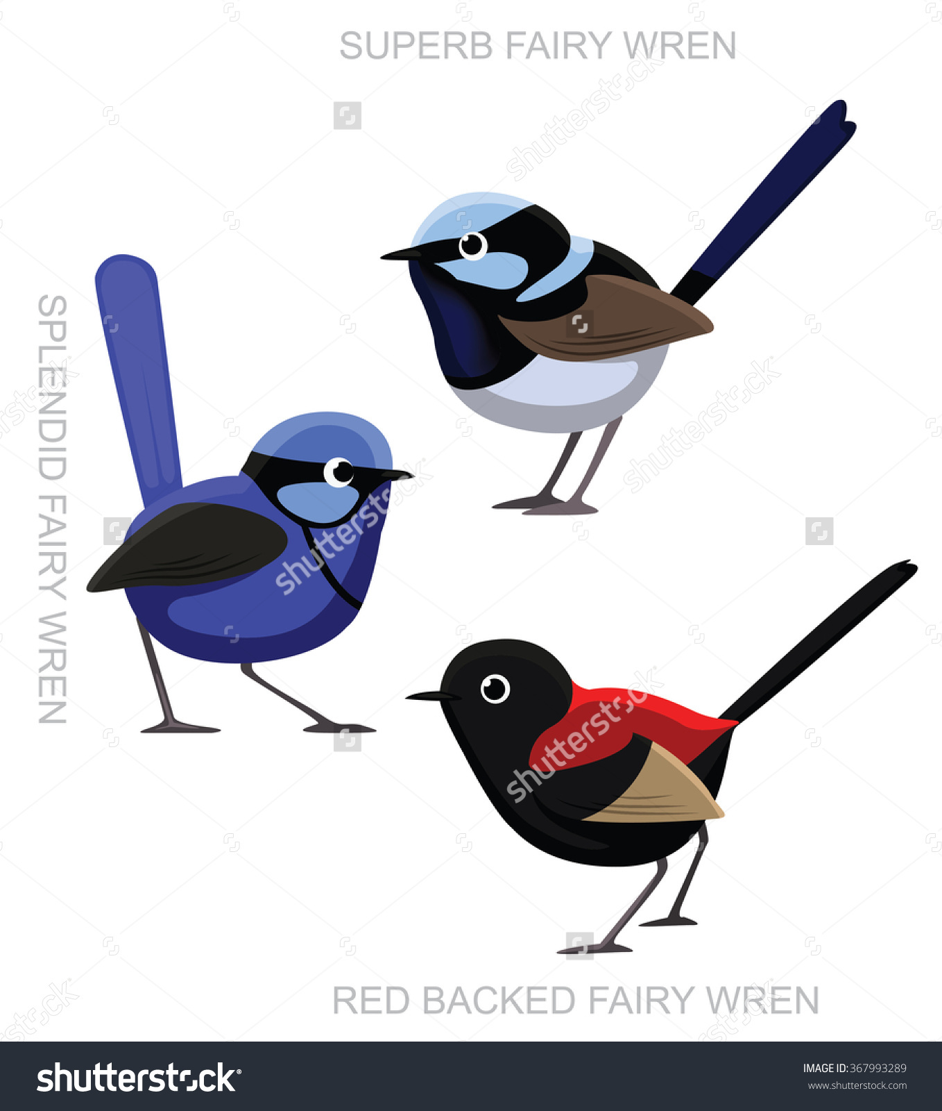 Superb Fairywren clipart #16, Download drawings