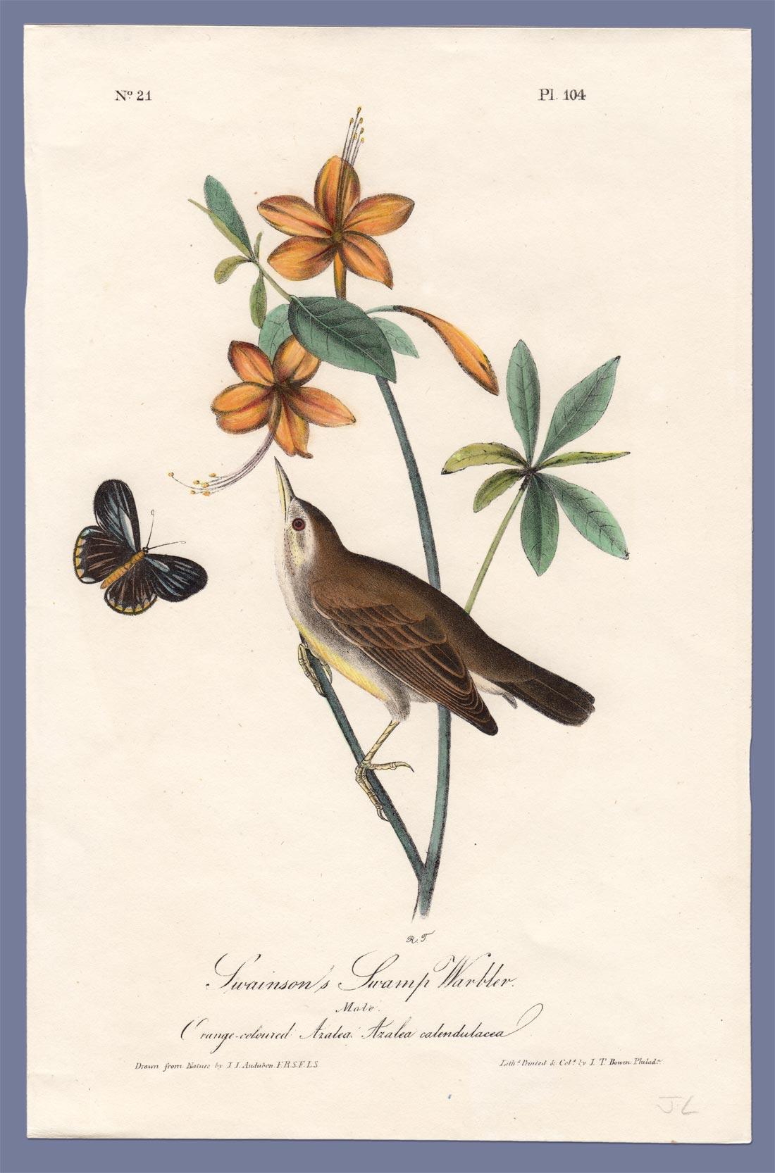 Swainson's Warbler coloring #16, Download drawings