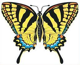 Swallowtail Butterfly clipart #19, Download drawings