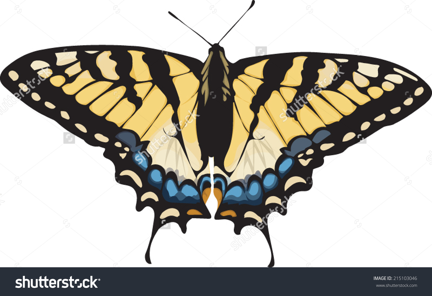 Swallowtail Butterfly clipart #7, Download drawings