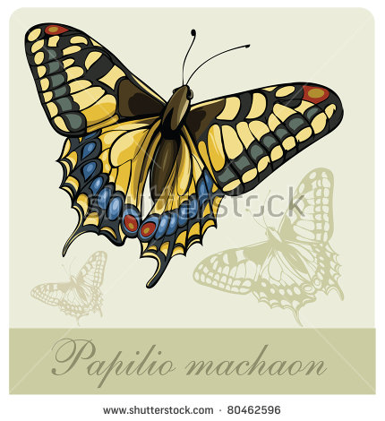 Swallowtail Butterfly clipart #10, Download drawings