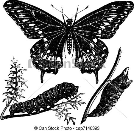 Swallowtail Butterfly clipart #9, Download drawings
