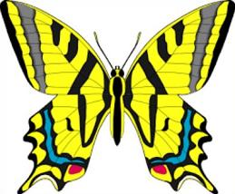 Swallowtail Butterfly clipart #20, Download drawings
