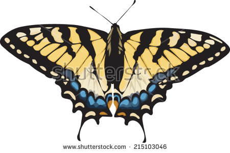 Swallowtail Butterfly clipart #14, Download drawings