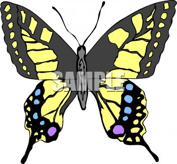 Swallowtail Butterfly clipart #18, Download drawings