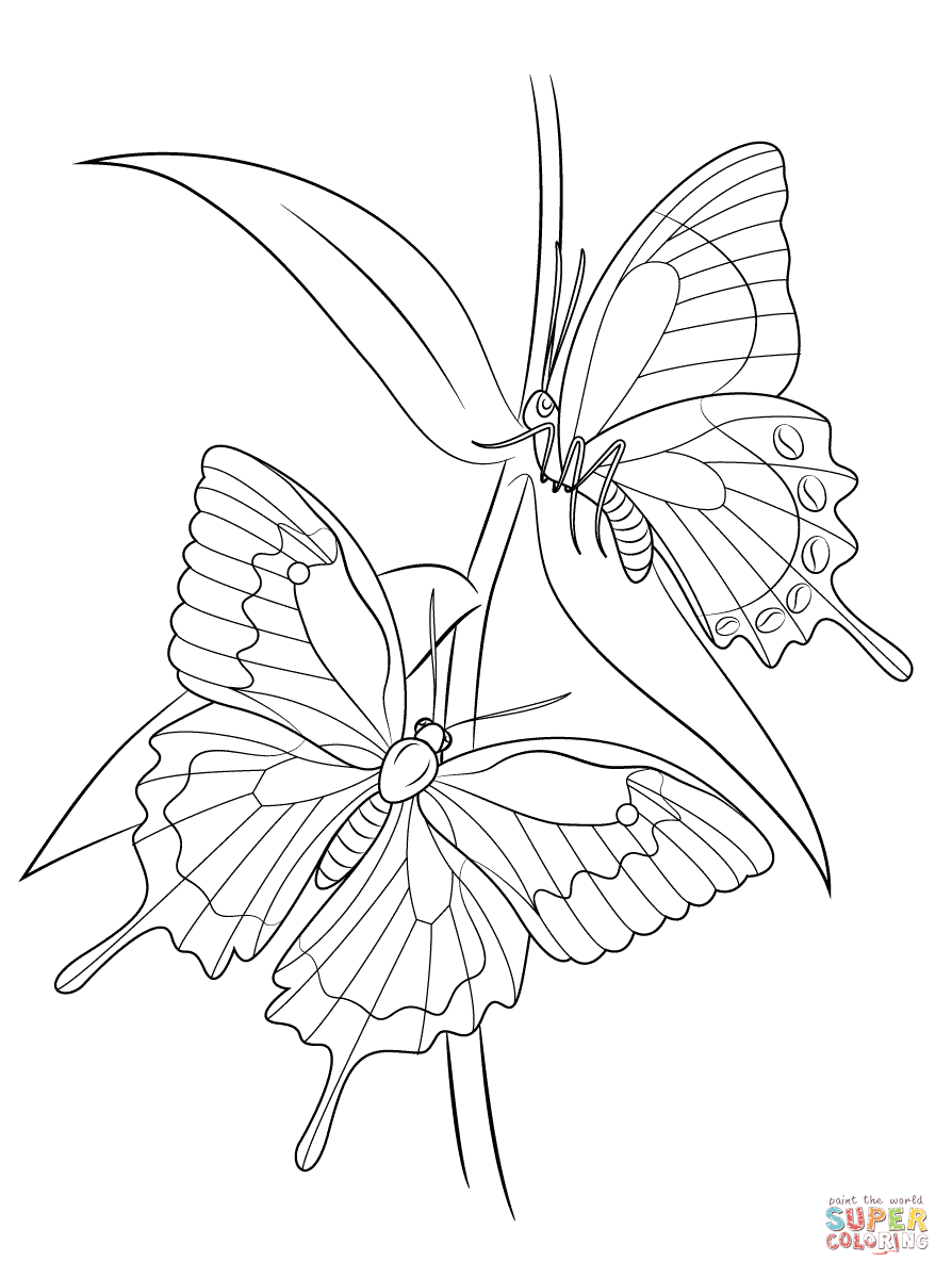 Ulysses Butterfly coloring #15, Download drawings