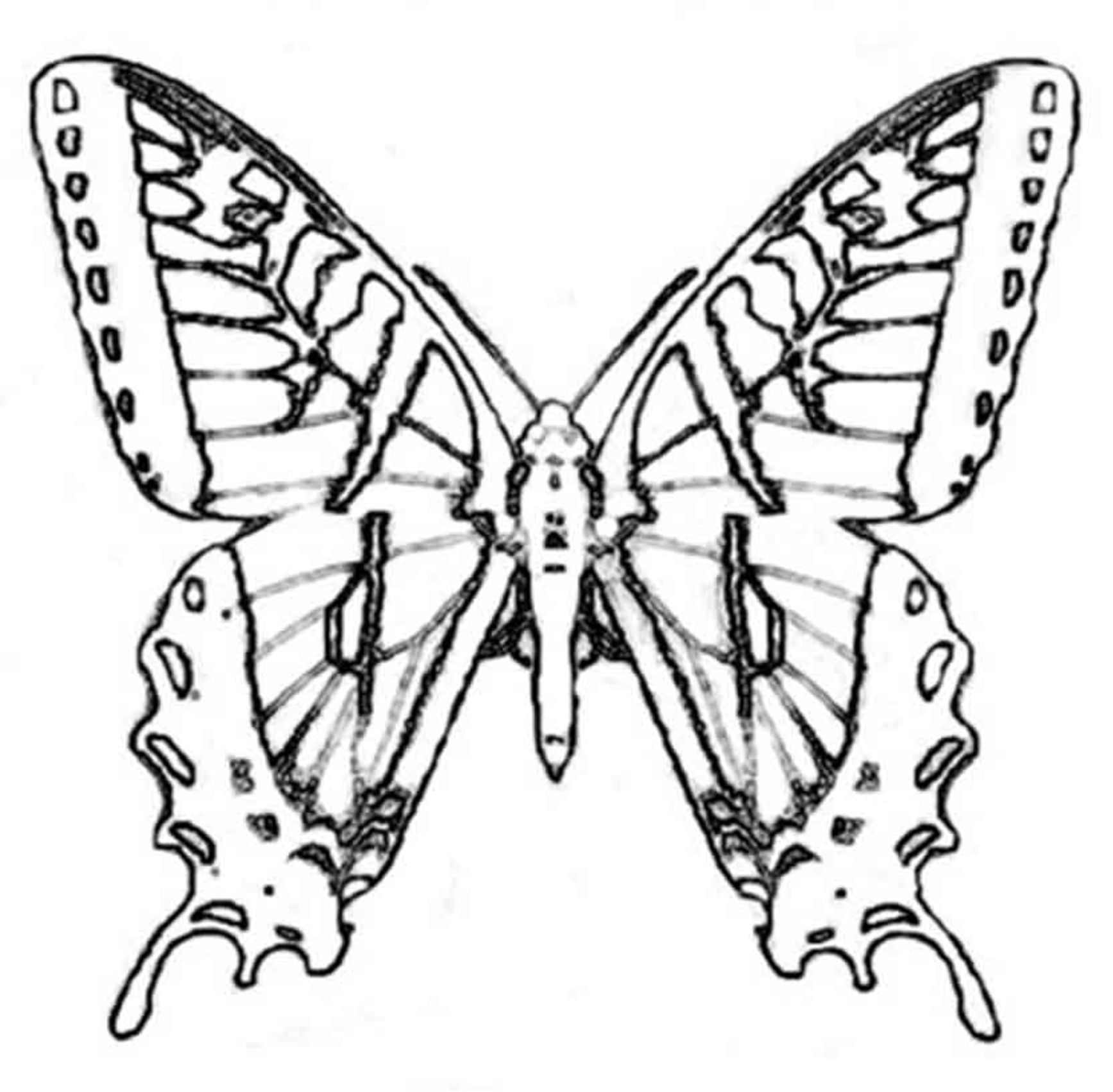 Simple butterfly coloring pages - digitalspace.info