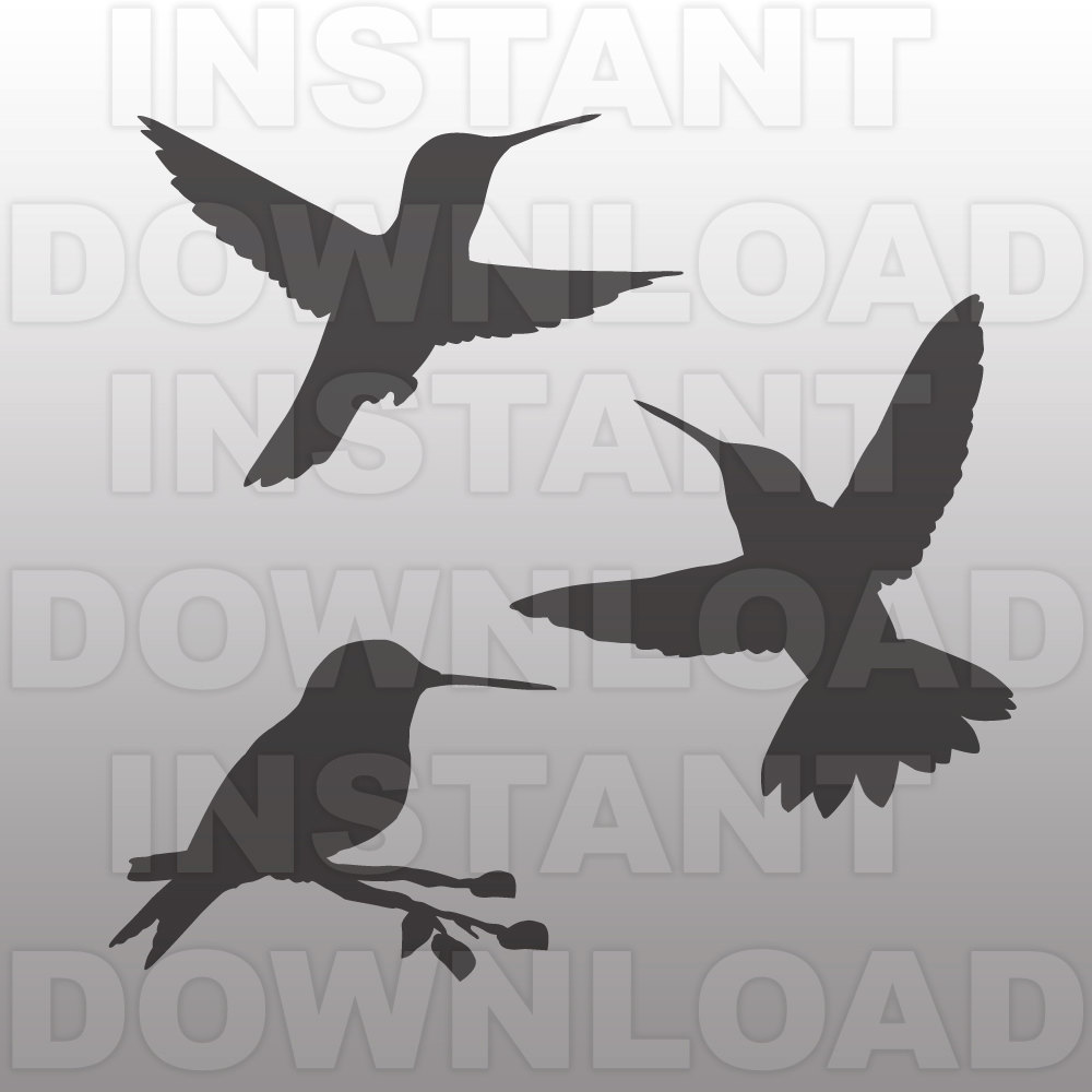 Swallow-tailed Hummingbird svg #3, Download drawings