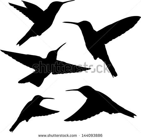 Swallow-tailed Hummingbird svg #10, Download drawings