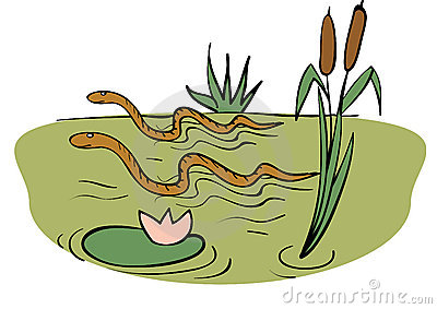 Swamp clipart #14, Download drawings