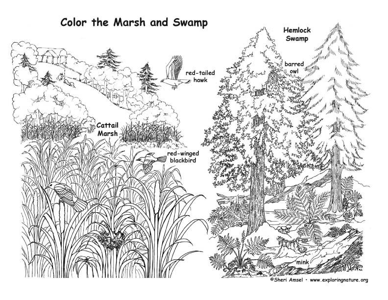 swamp coloring pages - swamp coloring download swamp coloring