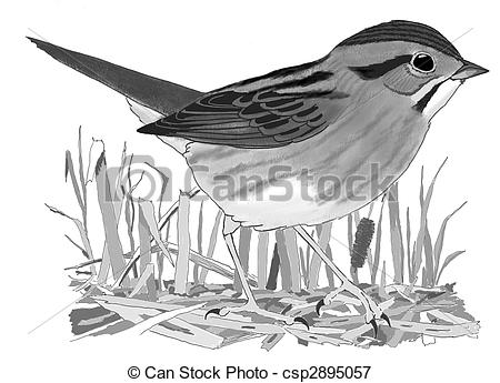 Swamp Sparrow clipart #18, Download drawings