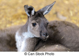 Swamp Wallaby clipart #5, Download drawings
