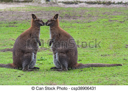 Swamp Wallaby clipart #12, Download drawings