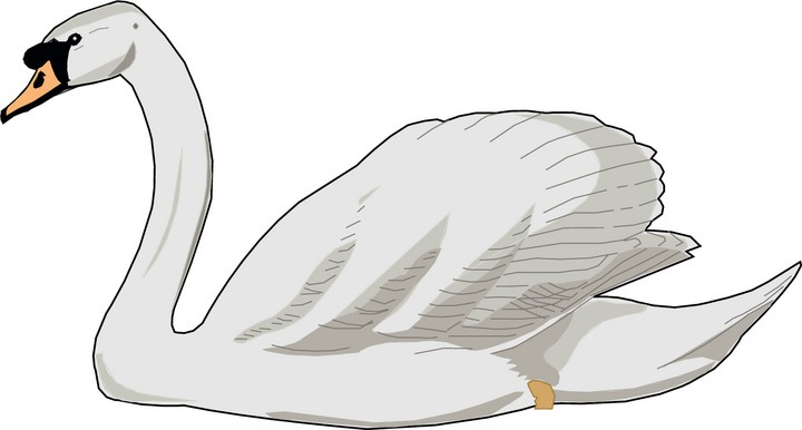 Swan clipart #9, Download drawings