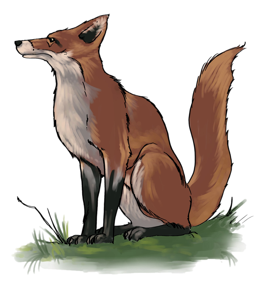 Swift Fox clipart #12, Download drawings
