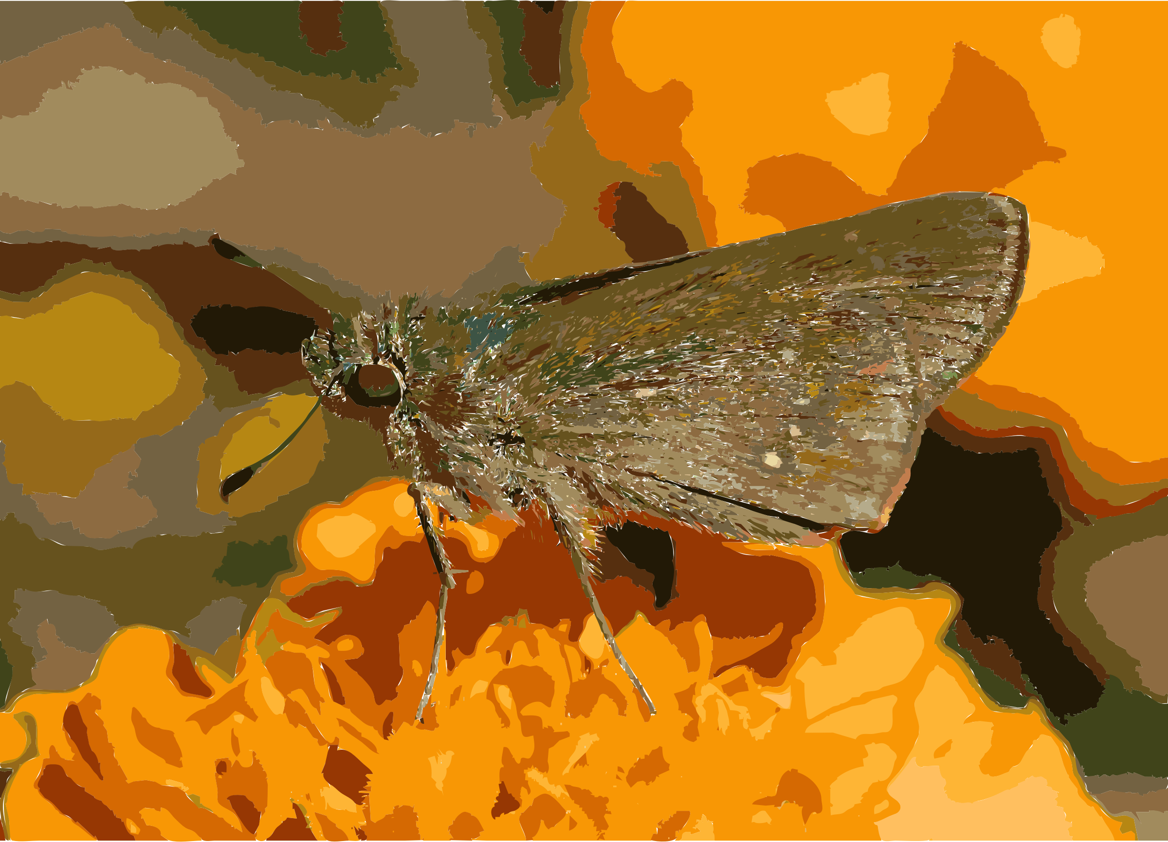 Swift Moth clipart #5, Download drawings