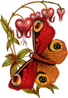 Swift Moth clipart #4, Download drawings