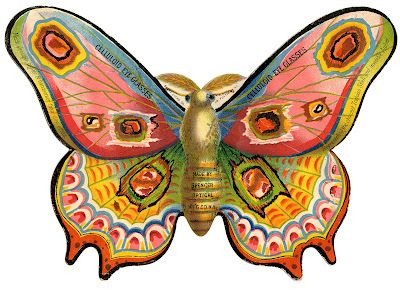 Swift Moth clipart #17, Download drawings