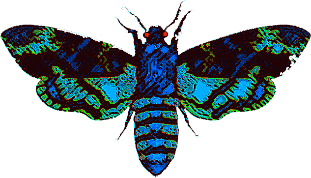 Swift Moth clipart #14, Download drawings