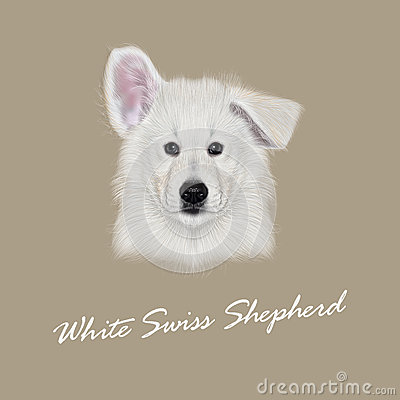 Swiss Shepherd clipart #14, Download drawings