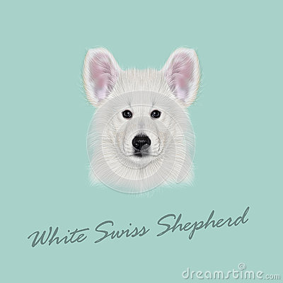 Swiss Shepherd clipart #15, Download drawings