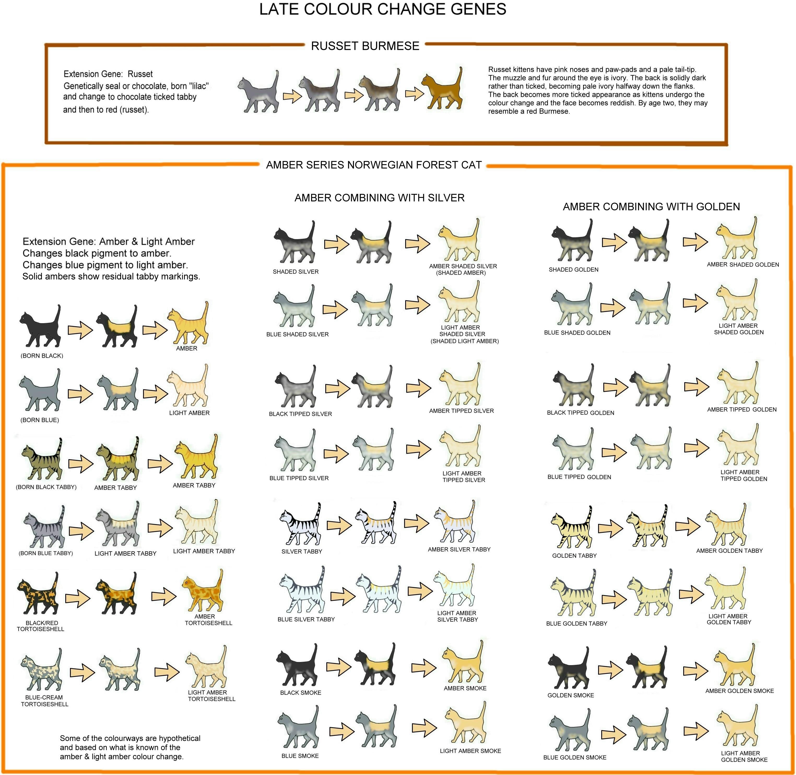 Tabby Cat coloring #18, Download drawings