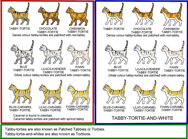 Tabby Cat coloring #20, Download drawings