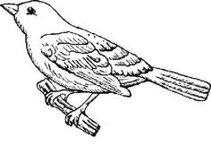 Tailorbird clipart #7, Download drawings
