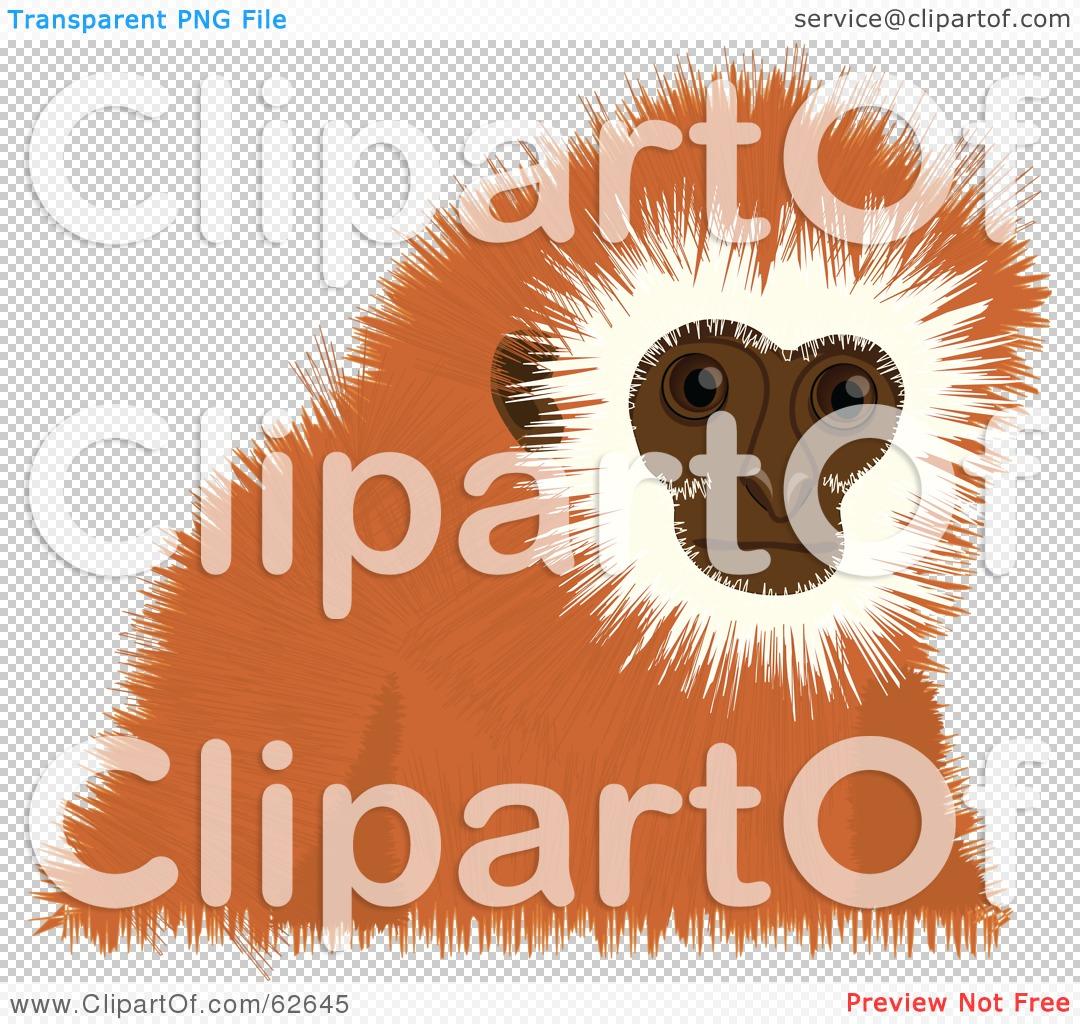 Tamarin clipart #7, Download drawings