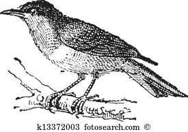 Tanager clipart #15, Download drawings