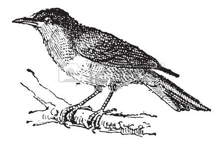 Tanager clipart #5, Download drawings