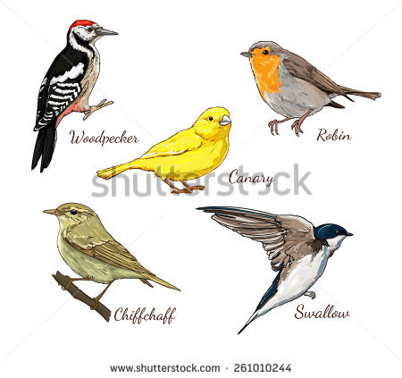 Tanager svg #13, Download drawings