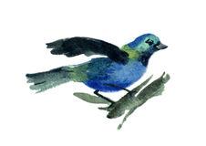 Tangara clipart #10, Download drawings