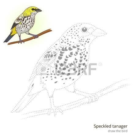 Tangara clipart #2, Download drawings