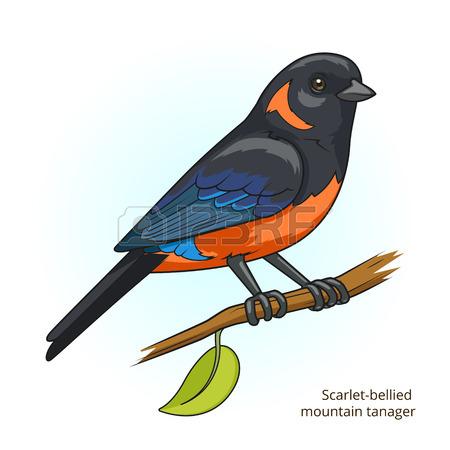 Tangara clipart #1, Download drawings