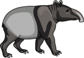 Tapir clipart #17, Download drawings