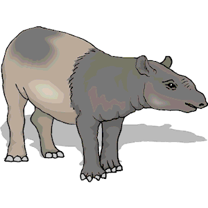Tapir clipart #16, Download drawings