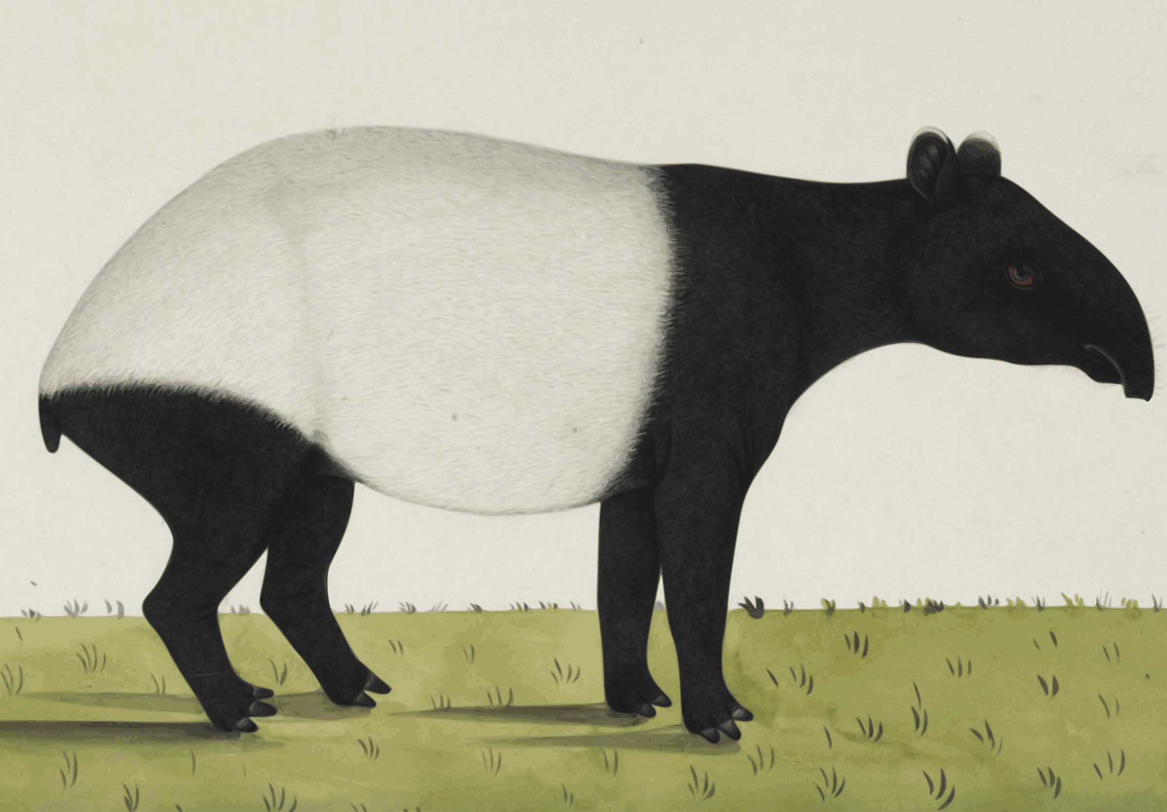 Tapir svg #13, Download drawings