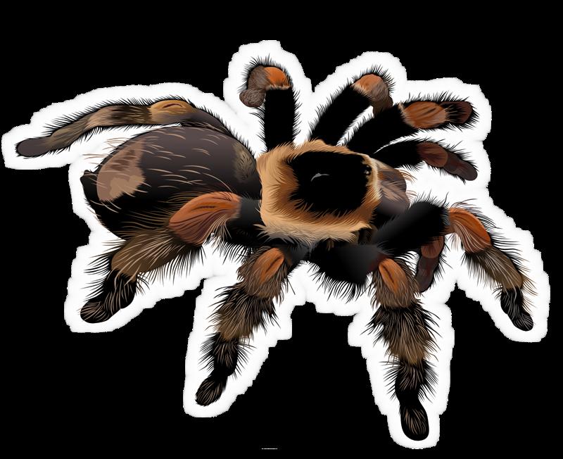 Tarantula clipart #18, Download drawings