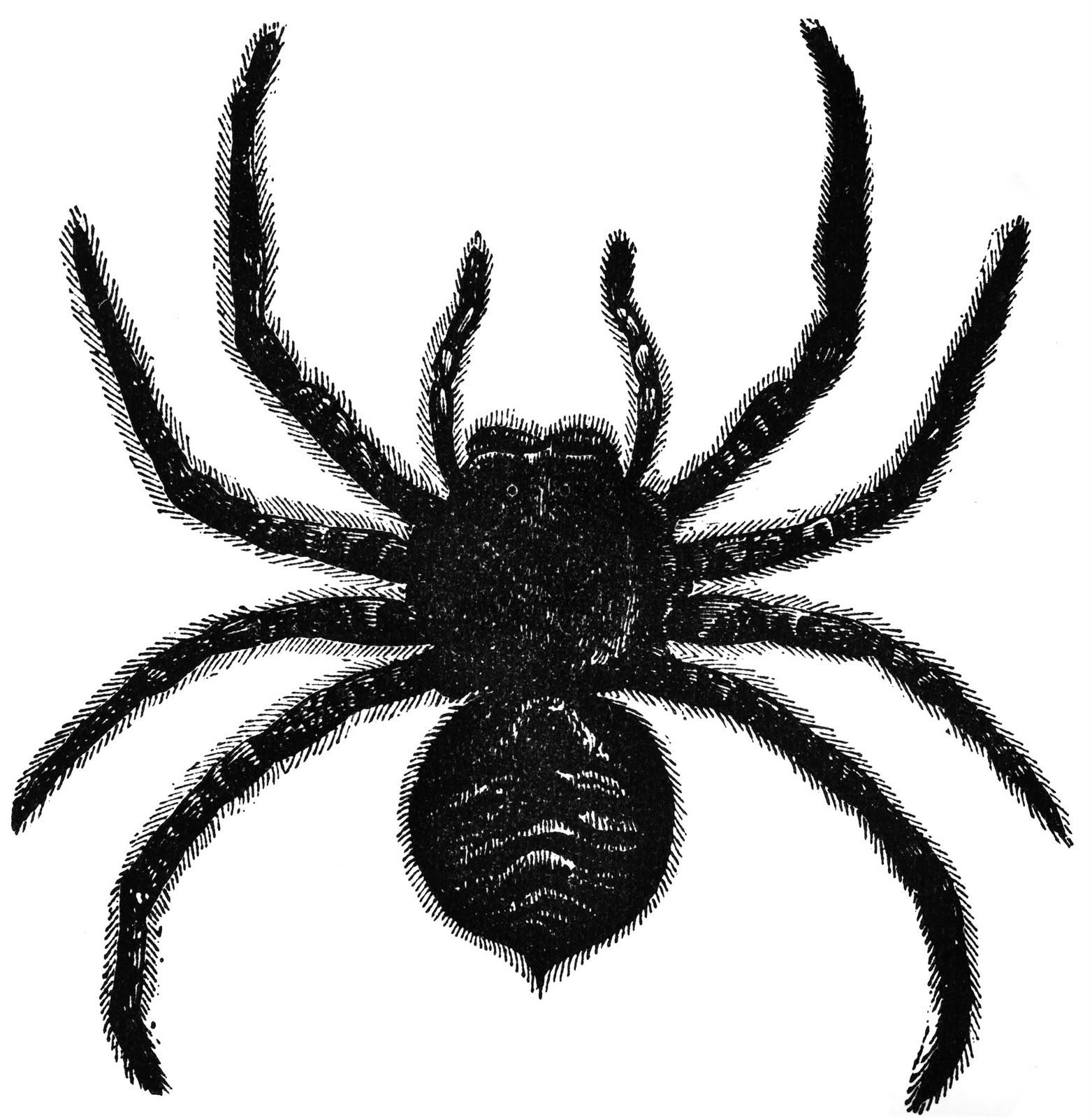 Tarantula clipart #2, Download drawings