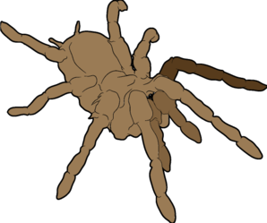Tarantula clipart #8, Download drawings